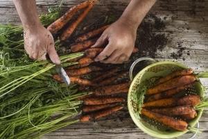 Spartipps: Sie können Geld sparen, indem Sie Ihr Gemüse selbst anbauen.